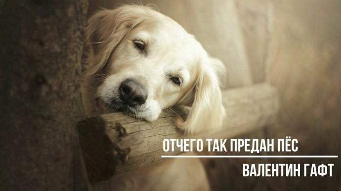 Валентин Гафт Отчего так предан пёс